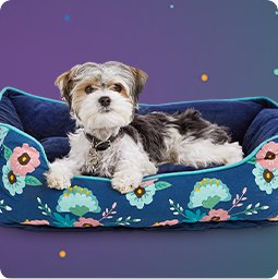 Dog Beds - Shop Now