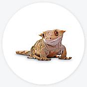 Reptile Store & Supply: Reptile Pet Shop & Supplies | Petco