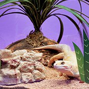 The basics: reptile food, habitats & more